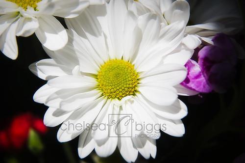 Flower 09_001blog