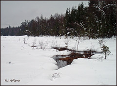 tache d'eau / spot of water (rariflora) Tags: winter snow nature water norway forest norge vinter eau hiver skog neige soe fort vann sn norvge langangen langevann ysplix kunstplatzlinternational
