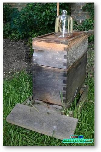 بالصور كيف يصنع النحل العسل سبحان الله كيف يصنع النحل