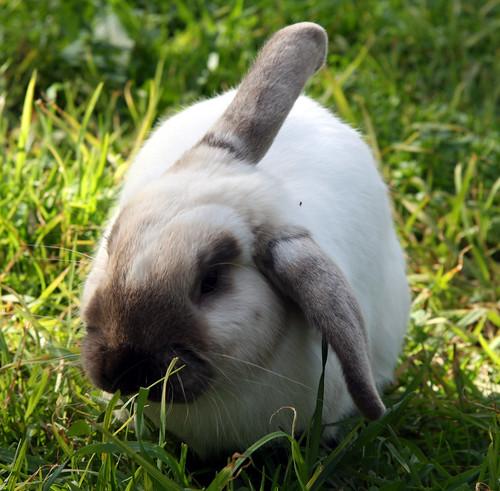 What Rabbit?