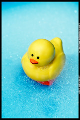 Day 266/365 - Rubber Ducky (herobyday) Tags: color 50mm soap nikon sink flash bubbles rubberducky ttl speedlight duckie strobe cls d300 sb800 strobist herobyday