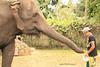IMG_7948 (rafaelhabermann) Tags: elephant big fat alia elefante mamifero femea paquiderme