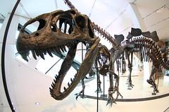 Big Dinosaur at the ROM (Jason Idzerda) Tags: toronto ontario canada canon dinosaur tokina 2009 f3545 1017mm 40d tokina1017mmf3545fisheye