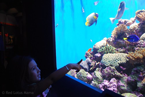 Look! There's Dory!