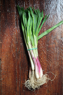 bunch of allium