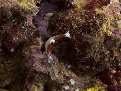 IMG_5858 (JBagged) Tags: tanzania underwater scuba diving scubadiving pemba
