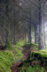Tree Creeping (almonkey) Tags: trees misty pine forest scotland vanishingpoint nikon path mysterious arran isleofarran hdr pathway omot d700 mackrie
