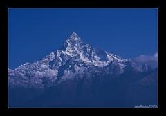 Nepal: Machhapuchhare - Fish Tail (6'997 mt ) (nepalbaba) Tags: nepal mountain mountains montagne trekking montagna picks fishtail atestaingiù damphus strechting mywinners macchapuchhare concordians earthasia paololivornosfriends panoramafotográfico panoramafotografico mallmixstaraward nepalbaba