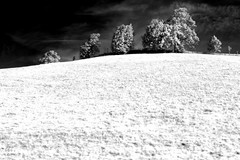 There are no real seasons any more (edouardv66) Tags: trees mountain nature montagne alpes 35mm landscape switzerland nikon valley bern fx chalets
