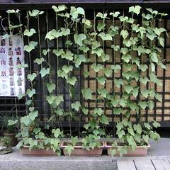 Takayama-City, JAPAN