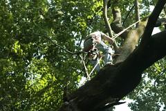 _MG_6369.JPG (zimbablade) Tags: trees sleepyhollow dougmiller videopoem