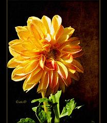 Memento (in eva vae) Tags: light orange black flower macro art texture shadows ombre fiore nero arancio luce ourtime postprocessing ricorda mywinners flickrvault sailsevenseas inevavae