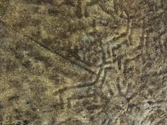 Petroglifos da Gurita I - Baroña - Porto do Son - A Coruña (Lansbricae) Tags: españa spain galicia wikipedia tp petroglyphs acoruña portodoson baroña petroglifos petroglifo flickraward agurita gettyimagesiberiaq2