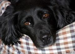 Ally (Monica M. ) Tags: cane nikon occhi sguardo nera cagnolina 70300 incrocio meticcio d80 monicamongelli