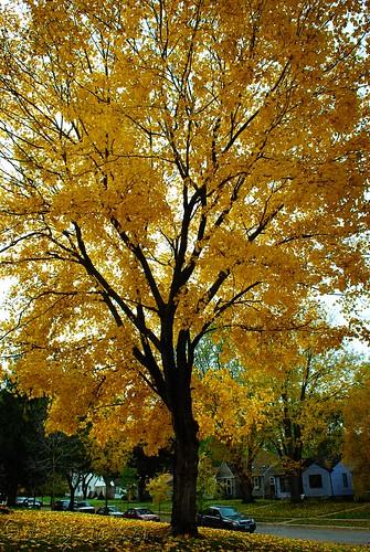 070 Fall Tree