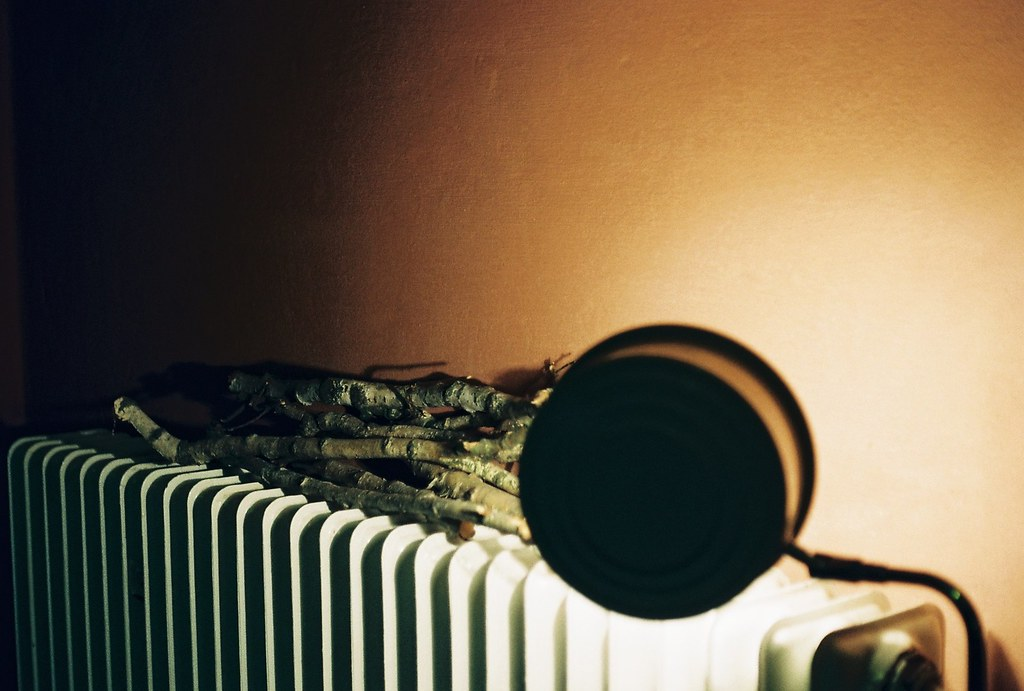 branches on radiator
