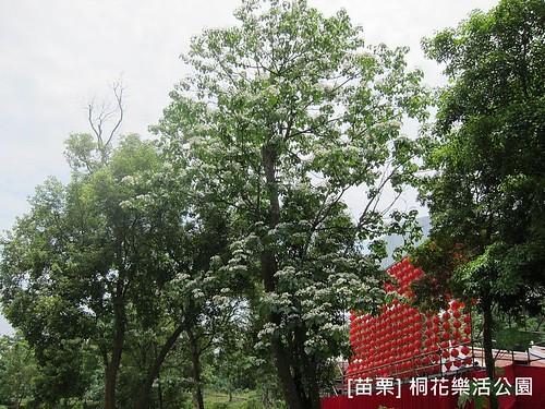 苗栗樂活桐花公園096