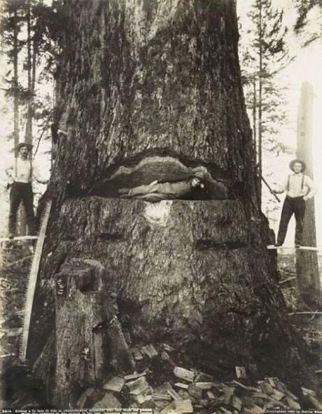 Лес рубят - щепки летят