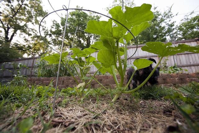 2011 06-04 Adam Thede - Backyard Garden