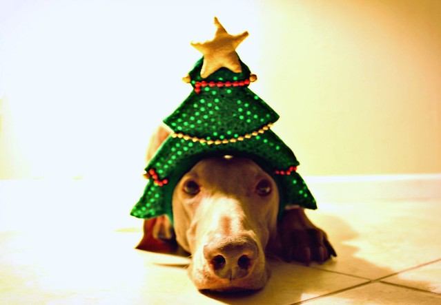 Thumb Feliz Navidad 2010 !!!