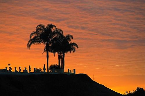 Palm Point Sunset