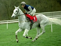 Desert Orchid (Arkle1) Tags: