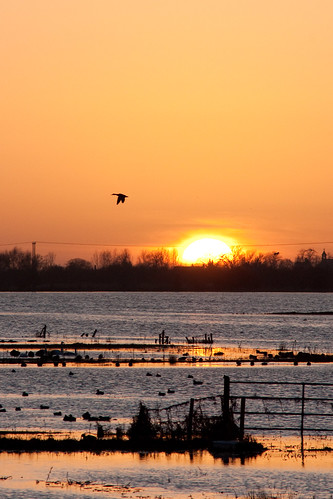 In Flight - Sunset at Welney
