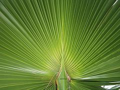 #4/09 (emasplit) Tags: green nature naturesfinest mywinners emasplit explore2009