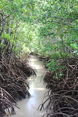 mangrove HDR (John from up north) Tags: bush australia darwin mangrove jungle tropic