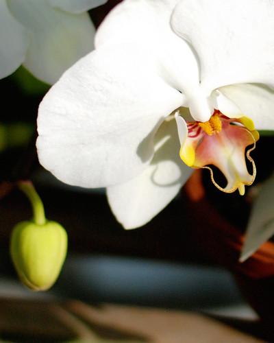 v botanical gardens 033