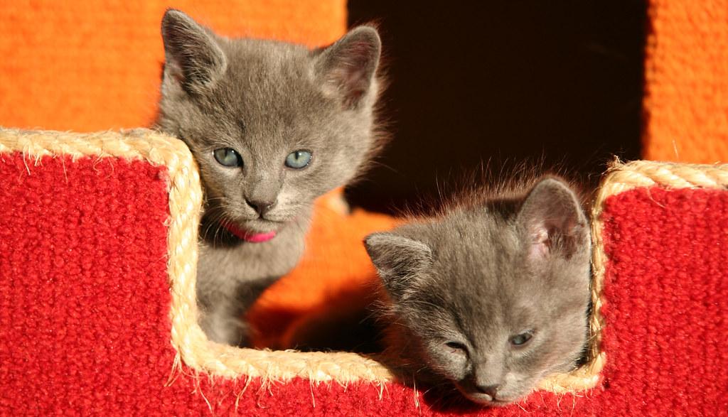 Kittens of Pegusha - Page 2 3244246243_dc15efc560_b