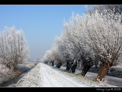 Landscape covered in snow (Natasja ❤) Tags: winter white snow holland tree ice nature netherlands dutch december thenetherlands brabant snowylandscape winterlandscape whiteworld