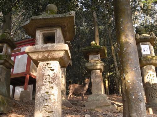 「高畑・春日大社」散歩-神の使いっぽい鹿