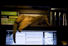 Someone tell me exactly how this is comfortable? (Free 2 Be) Tags: pet strange cat sleep loki aby 15challengeswinner