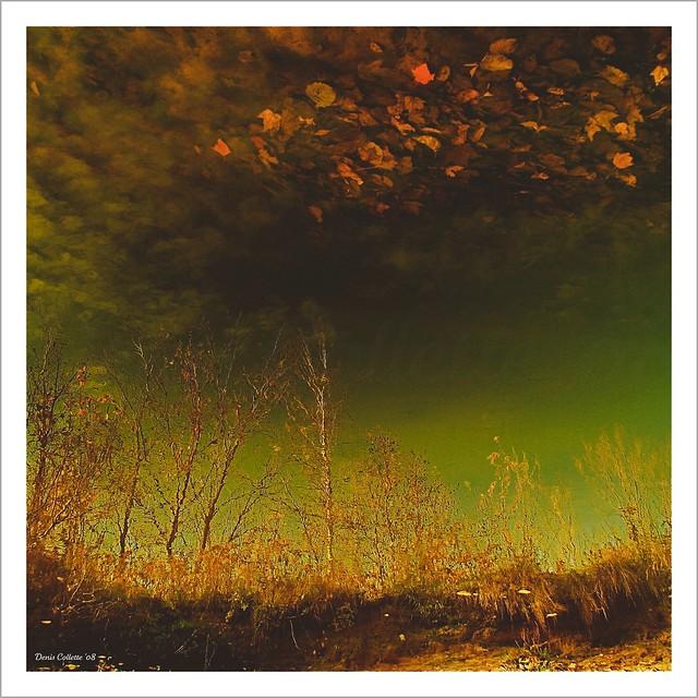 Ma rivière sauvageonne... au joli ciel d'automne...!!!