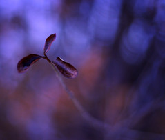 """""""The best way to make your dreams come true is to wake up."""" (ginnerobot) Tags: blue light red nature leaves walking three stem dof little bokeh bare growing february viewonblack"""