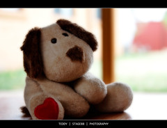 Teddy (Sam Ili) Tags: bear light color canon soft heart teddy random bokeh canberra orton canon24105mm4