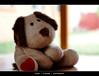 Teddy (Sam Ilić) Tags: bear light color canon soft heart teddy random bokeh canberra orton canon24105mm4