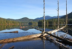 Trident Snag (Peggy Collins) Tags: blue trees lake mountains nature water reflections landscape view britishcolumbia scenic peaceful calm vista soe tranquil penderharbour sunshinecoast snag waterscape deadtrees naturesfinest gardenbay gardenbaylake peggycollins
