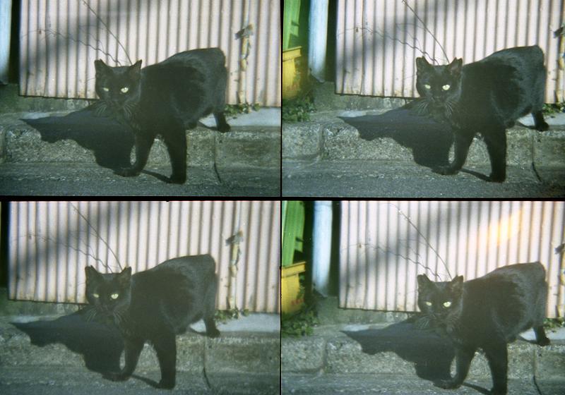 動かない黒猫