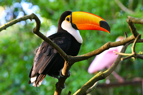 Fun Animal Facts to Help Save Animals: Toucan Facts, Toucan ...