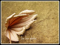 On the floor 1204 (Jia.Jenn31 (Away)) Tags: leave nature leaf onthefloor aplusphoto platinumheartaward
