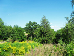 Summer vegetation (cez1k) Tags: trees polska colourful lato kolorowe drzewa wielobarwne grasspolandsummer