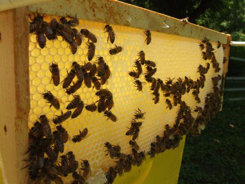 backlit bees