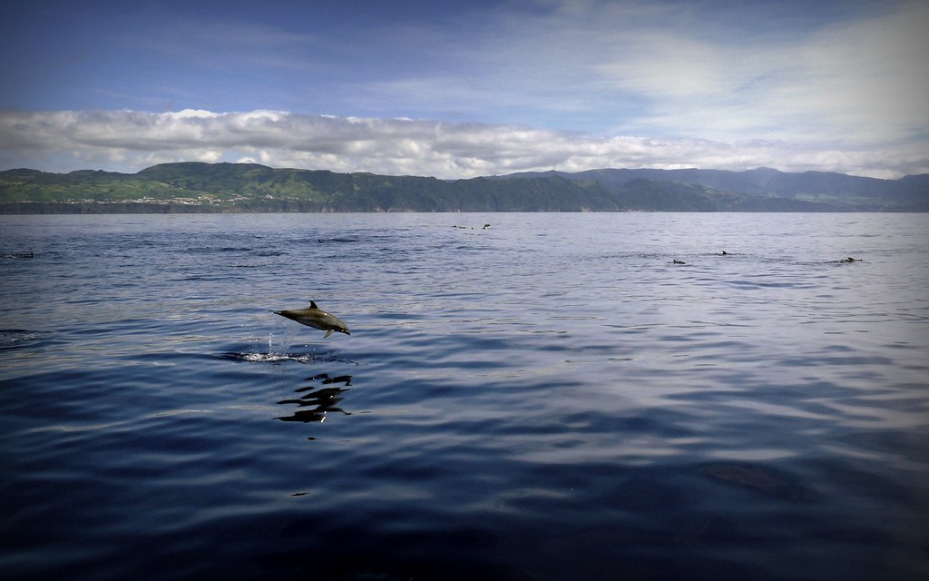 dolphins on the island
