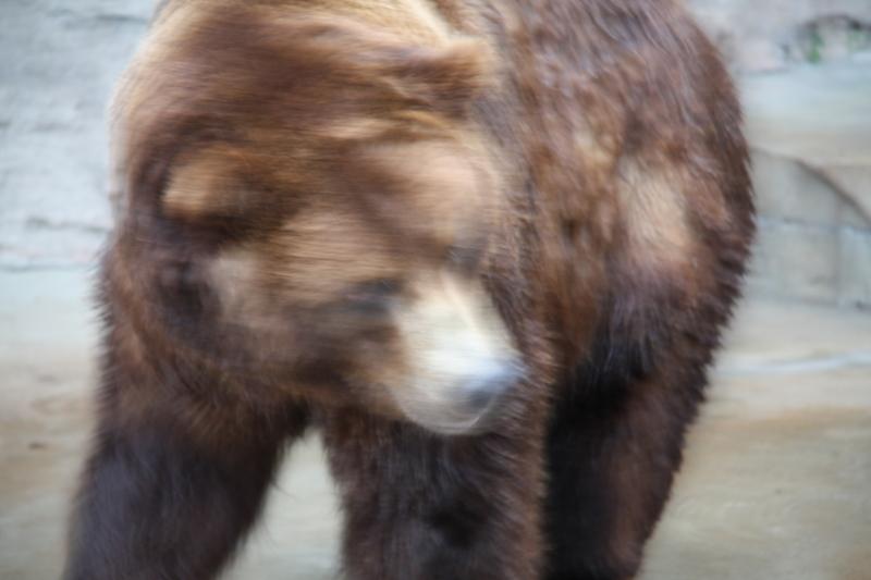 Bear Blur