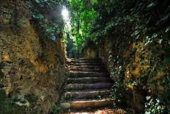 Verso la luce (Tati@) Tags: luz scale sentiero luce esperanza tati escaleras greatphoto segreto enredaderas laconi annatatti