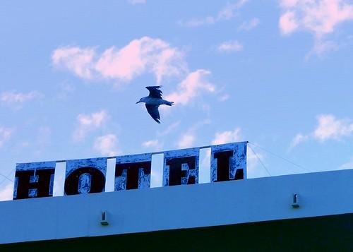 Gavià sobre lletres d'HOTEL