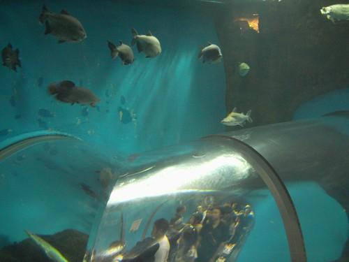 須磨海浜水族園-09