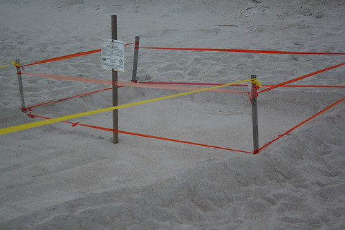 Turtle Nest, by LouFCD on Flickr